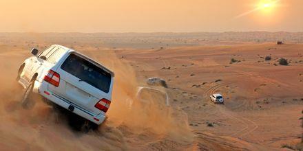 Upplev en häftig jeepsafari i öknen vid Abu Dhabi, Förenade Arabemiraten.