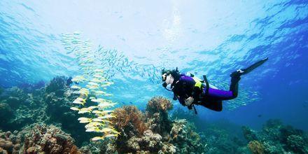 Vi erbjuder flera olika dykutflykter där du bland annat kan ta dykcertifikat.