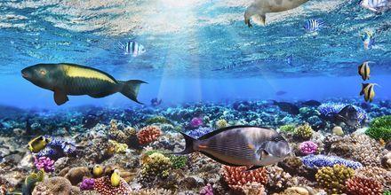 I Röda havet gömmer sig en färgglad undervattensvärld.