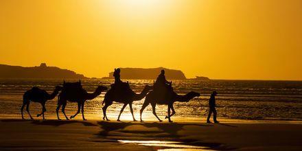 Standen i Agadir, Marocko.