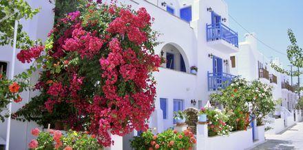 Agia Anna på Naxos i Grekland.