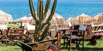 Slå dig ner för lunch vid havet i Agia Marina på Kreta, Grekland.