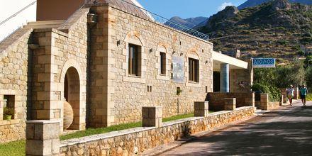 Gata utanför hotell Aiolos i Stoupa, Grekland.