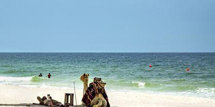 Siesta på stranden i Ajman.