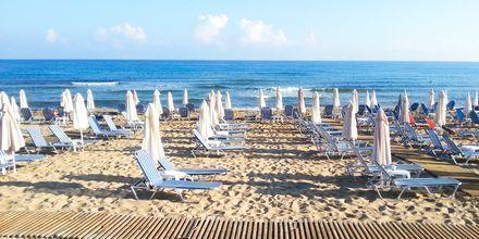 Stranden vid hotell Akrogiali i Malia på Kreta, Grekland.