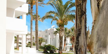 Hotell Akrogiali i Malia på Kreta, Grekland.