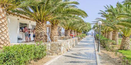 Hotell Akti Beach Club i Kardamena på Kos, Grekland.