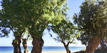 Stranden vid hotell Akti Chara på Kreta, Grekland.