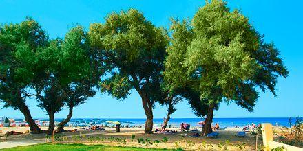 Hotell Akti Chara på Kreta, Grekland.