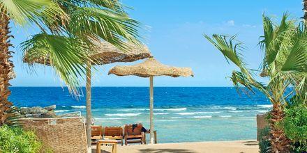 Albatros Citadel Resort ligger precis vid stranden.