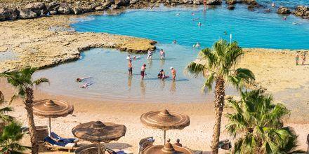 Lagun på på hotell Albatros Citadel Resort i Sahl Hasheesh, Egypten.