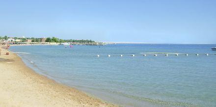 Stranden vid Albatros White Beach Resort i Hurghada.