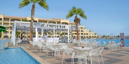 Olympus poolbar på Albatros White Beach Resort i Hurghada.