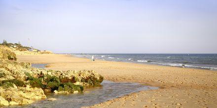 Praia Salgados-stranden vid Albufeira på Algarvekusten, Portugal.