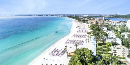 Stranden i Alcudia och Playa de Muro på norra Mallorca är bred, finkornig och barnvänlig.