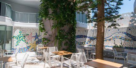 Hotellbar på hotell Alia Beach i Hersonissos, på Kreta.