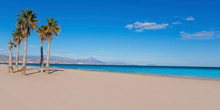 Playa de San Juan i Alicante – en av Spaniens bästa stränder.