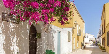 Ön Tabarca är perfekt för en dagsutflykt.