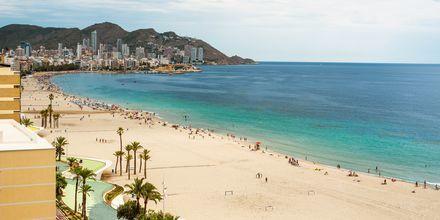 Strand i Benidorm nära Alicante.