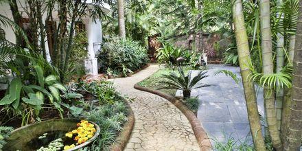Trädgården på hotell Alidia Beach Resort i Norra Goa, Indien.