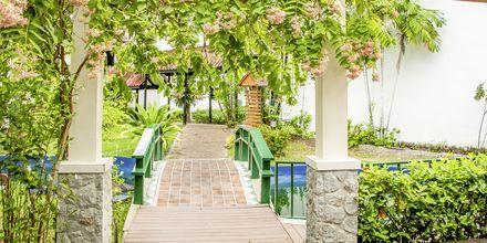 Trädgården på Amora Beach Resort i Bangtao Beach på Phuket.