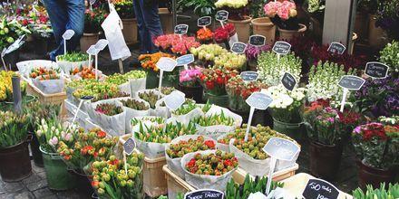 Amsterdam och Holland är känt för sina tulpaner. På tulpanmarknaden kan du köpa hem tulpanlökar!