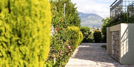 Mysiga omgivningar på hotell Aphrodite i Stoupa, Grekland.