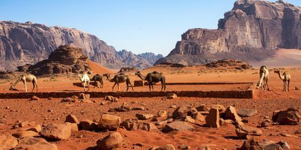Wadi Rums röda ökenvärld.