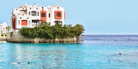Ta en snorklingstur på hotell Arabella Azur Resort i Hurghada, Egypten.