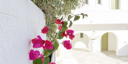Hotell Artemis på Antiparos i Grekland.
