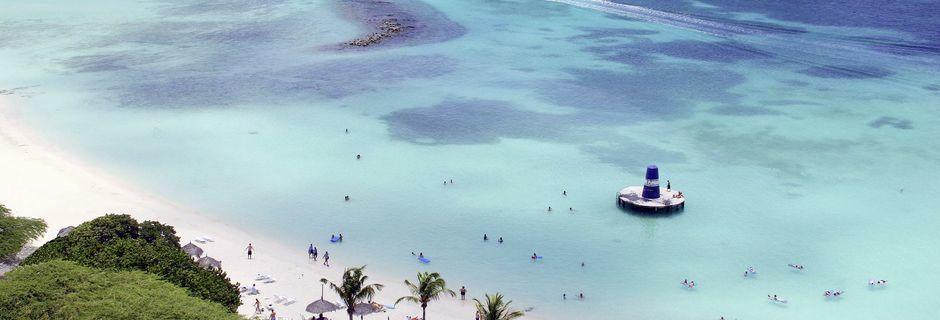 Välkommen till Aruba! Här väntar vita sandstränder, turkosblått vatten och tropiska växter.