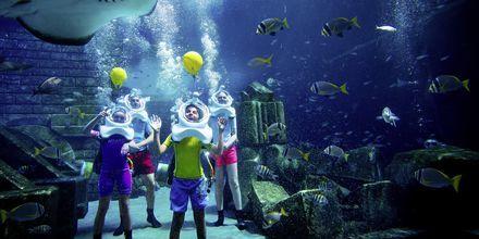 Utflykt med Apollo – Aquaventure Waterpark och Lost Chambers.