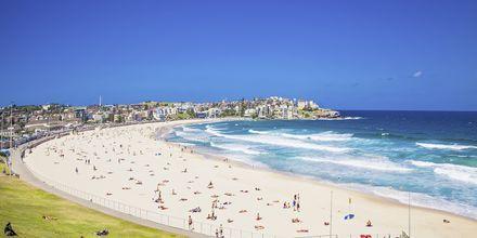 Populära Bondi Beach, Sydney