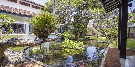 Trädgård på hotell Avani Bentota Resort & Spa i Bentota, Sri Lanka.