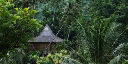 Bali med sin vackra natur är ett härlig resmål året om.