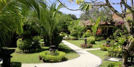 Trädgård på hotell Bali Reef Resort i Tanjung Benoa, Bali.
