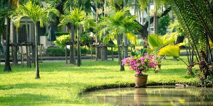 Lumphini Park i Bangkok, Thailand.