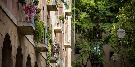 Grönskande parker och färgglada balkonglådor.