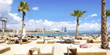Koppla av på stranden i stadsdelen Barceloneta.