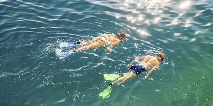 Kroatiens klara vatten är perfekt att snorkla i.