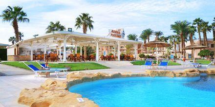 Mocha Bar på hotell Beach Albatros Resort i Hurghada, Egypten.