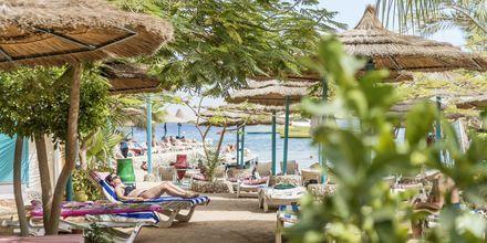 Stranden vid hotell Bella Vista i Hurghada, Egypten.