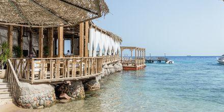 Njut av svalkande dopp i Röda havet.