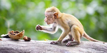 Sri Lanka har gott om nationalparker.