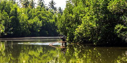 Sjön i Bentota, Sri Lanka.
