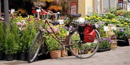 Blomstermarknad i Berlin, Tyskland.