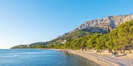 Stranden vid hotell Bluesun Alga i Tucepi, Kroatien.
