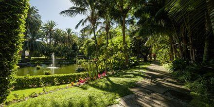Trädgården på hotell Botanico i Puerto de la Cruz, Teneriffa.