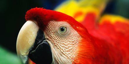 Amazonas är en av världens mest artrika regnskogar.