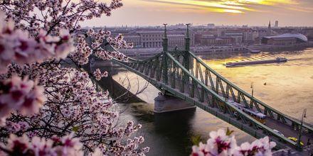 Bron som delar upp Budapest i Buda och Pest kallas Kedjebron.